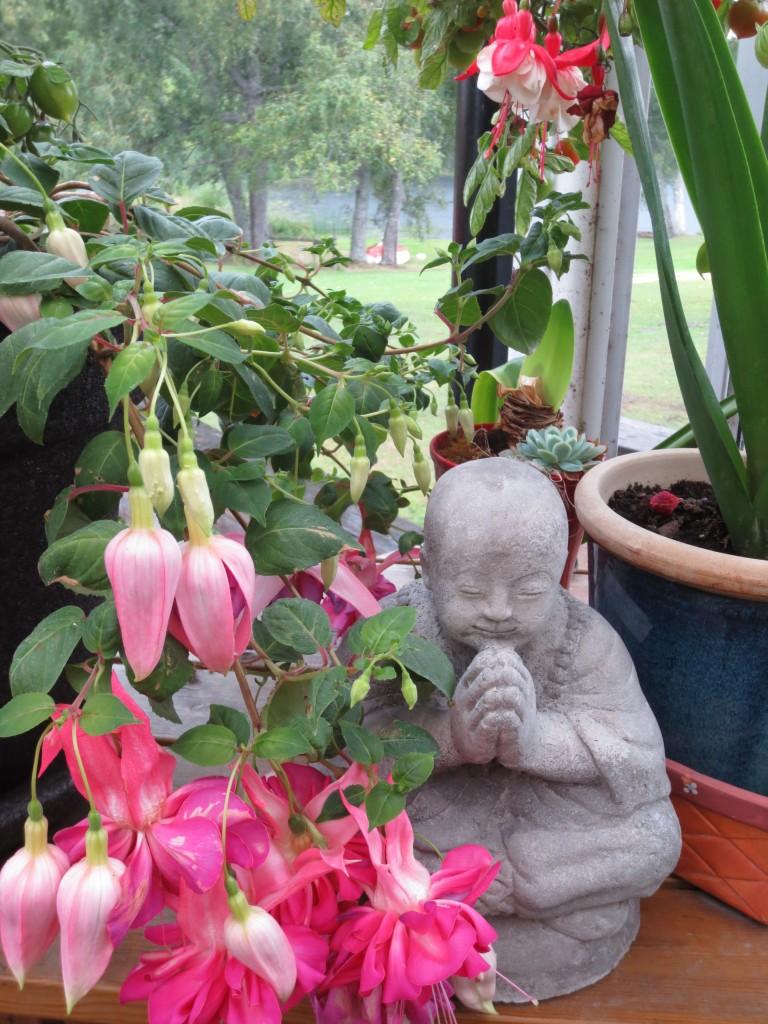 fuchsian, med blommor som ser ut ut som dansande änglar