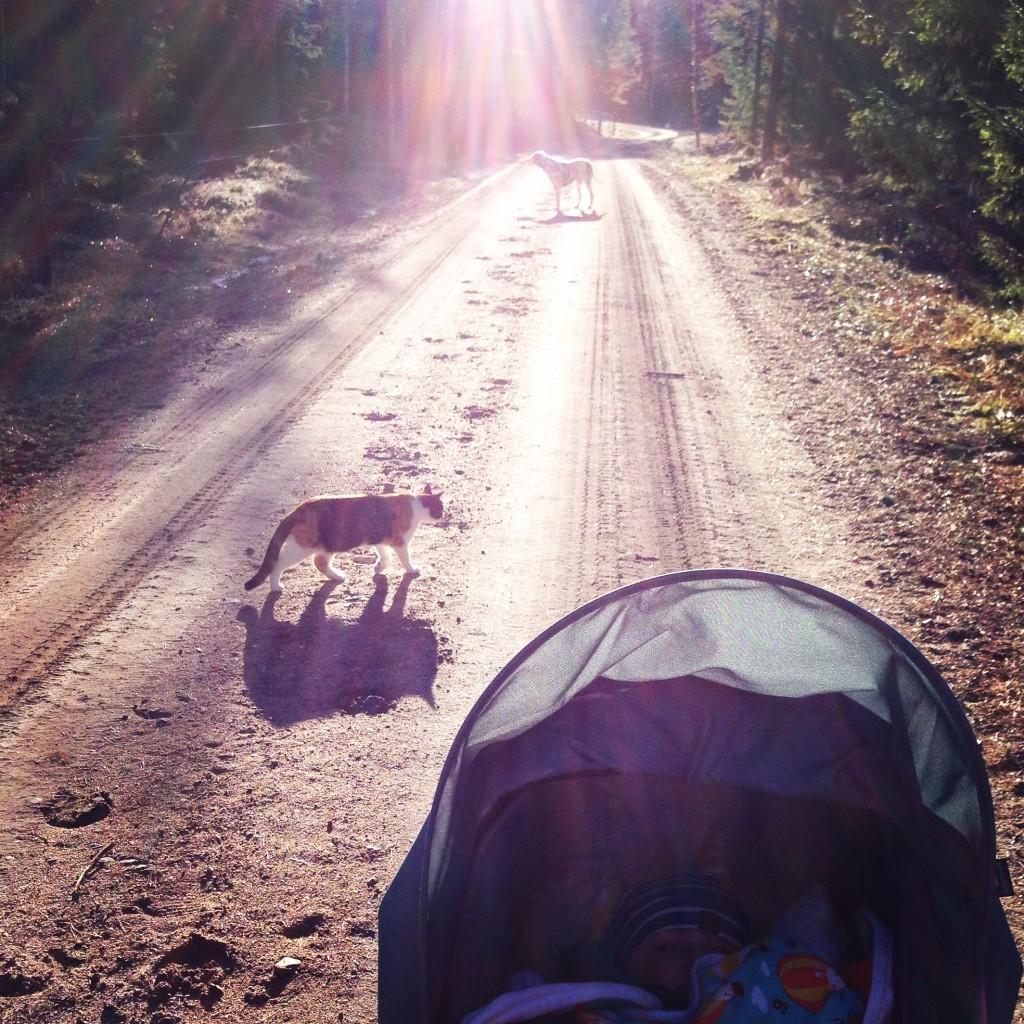 Första promenaden på sååå länge, men Vega i barnvagnen, katten Solveig och dalmatinern Alice som medvandrare.